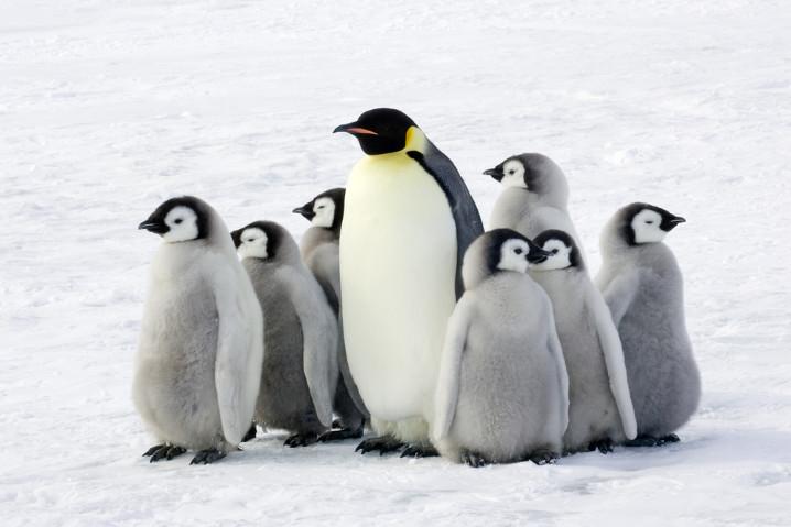 tux-pinguinos-polo-sur-linux