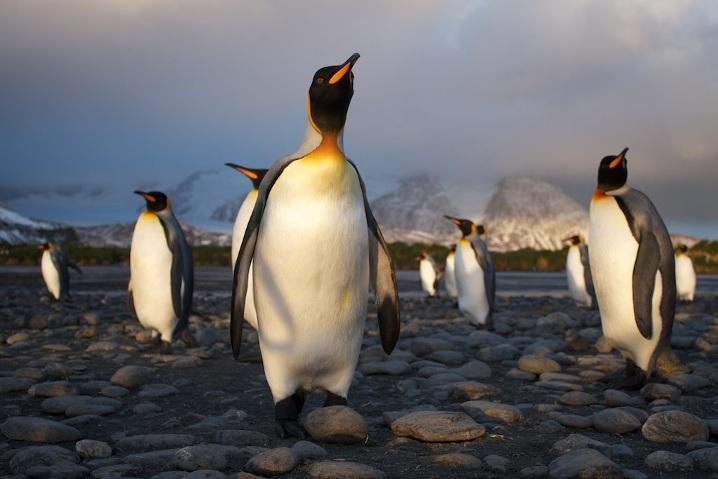 tux_pinguinos_penguins
