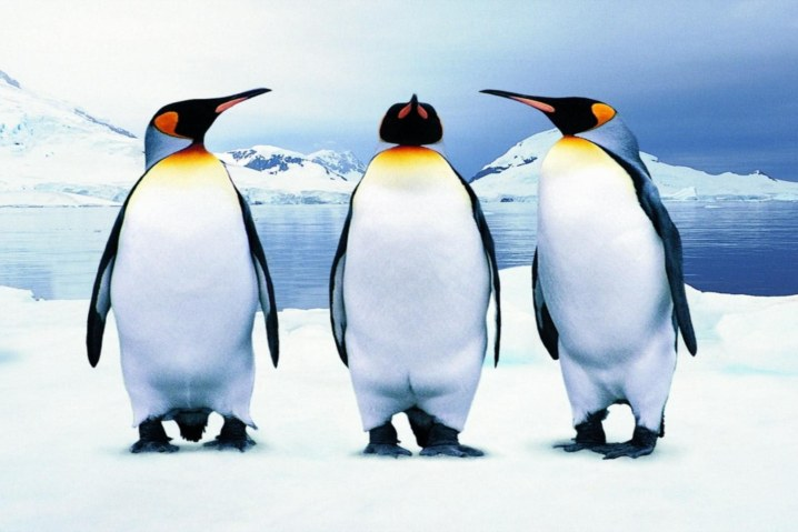 penguins_tux