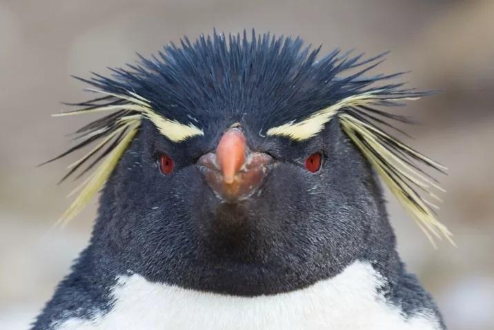 pinguino_enojado_tux