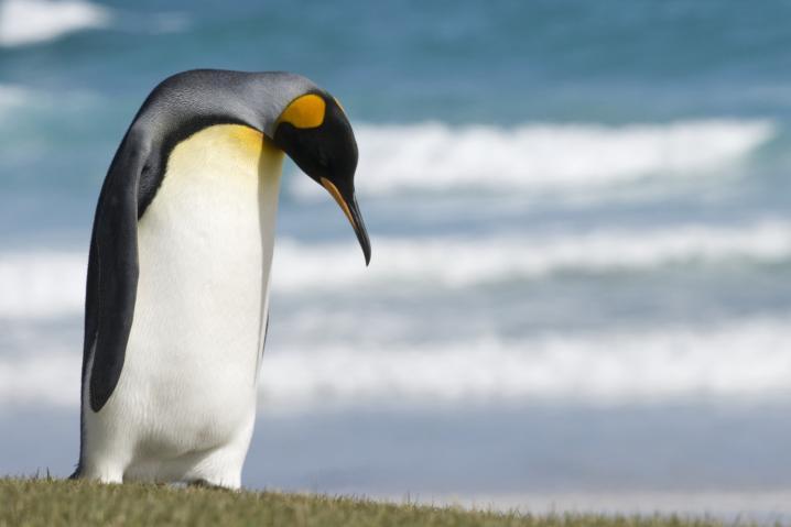 penguin_tux